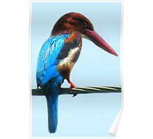 <º))))>< KINGFISHER PICTURE/CARD<º))))><  Poster