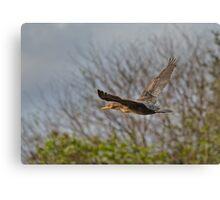 Cormorant on Wings Canvas Print