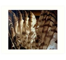 Turkey Feathers with Sepia Tones  ^ Art Print