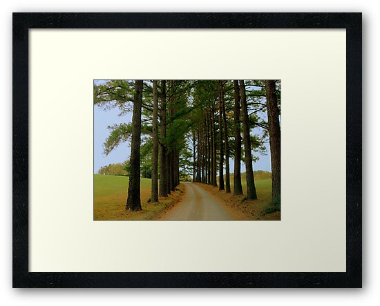 Pine Pathway ^ by ctheworld