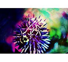 Colourful Creations III Photographic Print