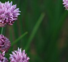 Purple Flower V  Sticker