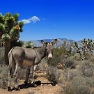 Burro at Spring Mountain State Park, Nevada by Vickie Emms