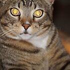 Can't Resist His Beautiful Eyes by marialberg