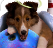 I Love Bowling With Angel Shelties Sticker