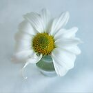 A Small Pleasure Daisy Portrait by LouiseK