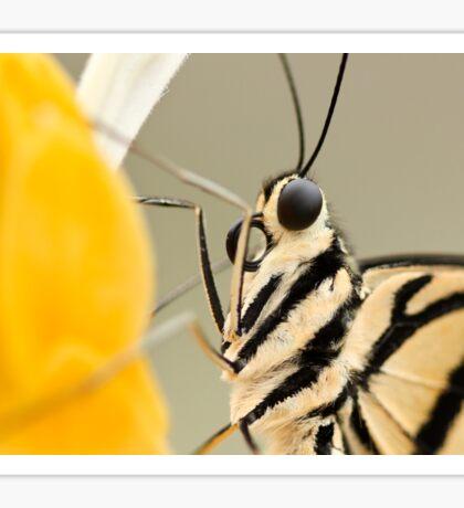 Butterfly Macro  Sticker