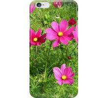 Cosmea iPhone Case/Skin