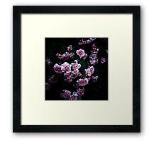 rose in the dark 02 Framed Print
