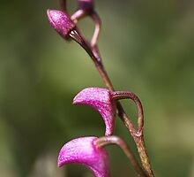 Small Orchid by Joy Watson