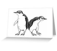 Little Blue Penguins - smallest penguin in the world! Greeting Card