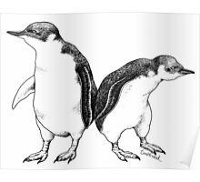 Little Blue Penguins - smallest penguin in the world! Poster
