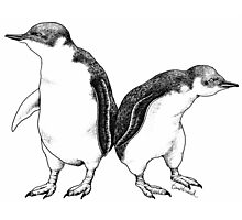Little Blue Penguins - smallest penguin in the world! Photographic Print