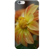 zinnia iPhone Case/Skin