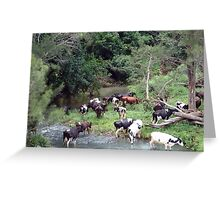 cows in the creek Greeting Card