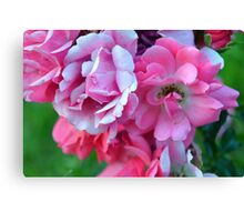 Natural background with pink roses and green leaves. Canvas Print