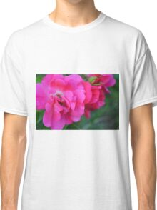Natural background with pink roses and green leaves. Classic T-Shirt