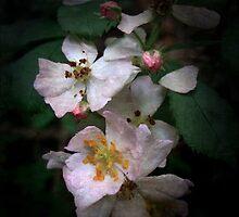 The Wild Roses by LouiseK