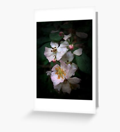 The Wild Roses Greeting Card