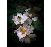 The Wild Roses Photographic Print