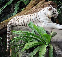 White Tiger - Singapore. by Ralph de Zilva