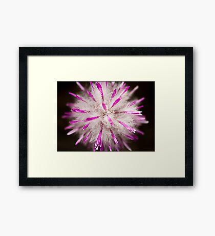 furry fluffy flower Framed Print
