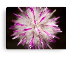 furry fluffy flower Canvas Print
