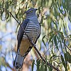 Pacific baza by Jay-Wolf