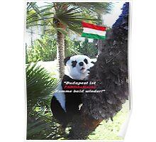Ihr spezielles Panda Souvenir direkt aus Budapest, Ungarn! Poster