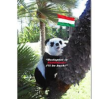 Special PANDA Souvenir directly from Budapest, Hungary Photographic Print