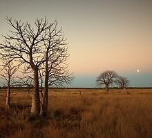 Moonrise by Mel Brackstone