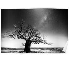 Dinner tree constellations Poster