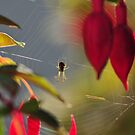 """"""" Hanging By Fuschia Threads """" by Richard Couchman"""
