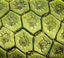 Monstera fruit in macro by Celeste Mookherjee