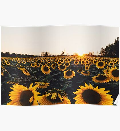Sunflower Field (New 2016) Poster