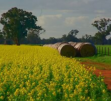 Canola and rolls by ndarby1