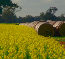 Canola and rolls Sticker