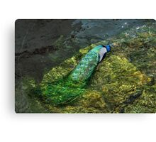 Waterfowl? Canvas Print