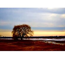 Willow at Sunset Photographic Print