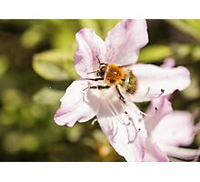 I will bee there Photographic Print