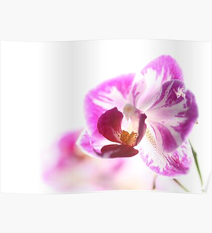 Tranquil orchid  Poster