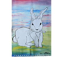 Rabbit in coutryside Photographic Print