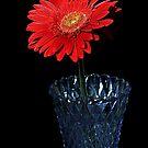 Flower on black by henuly1