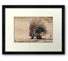 Porcupine and its Quills - African Wildlife Framed Print