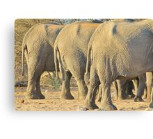 Elephant Diet Clinic - Funny African Wildlife Canvas Print
