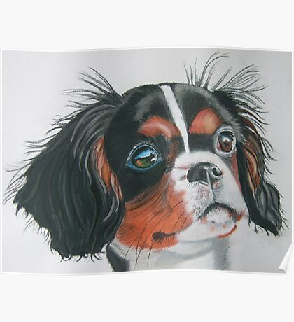 Sandy - King Charles Spaniel Tri Color Poster