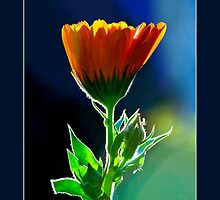 A Little Flower by Lisa Torma