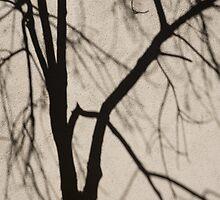 Serendipity - Playing With the Shadows by Georgia Mizuleva