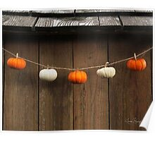 String of Pumpkins Poster