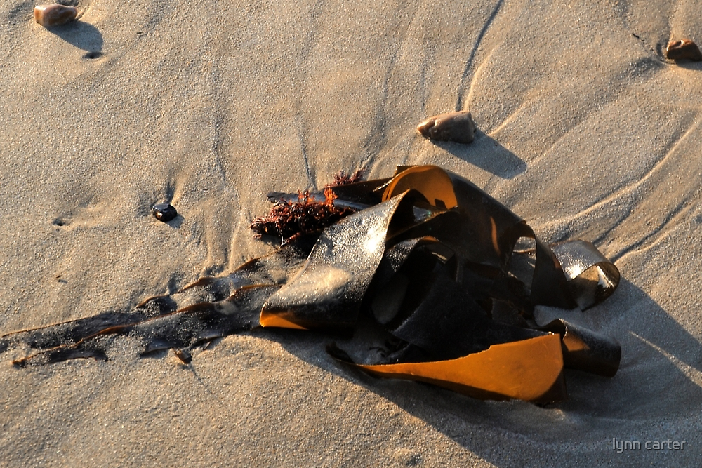 A Bouquet of Seaweed by lynn carter